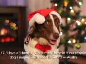 "117. Have a ""Hammie\"" Christmas (Hammie is our rescued dog\'s name)"