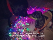 042. Fur Cousin, Kisses Across the River of Lights