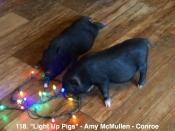 118. Light Up Pigs