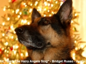 164. Bark the Hairy Angels Sing