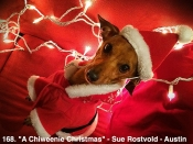 168. A Chiweenie Christmas