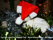 59. Jub Jub Under The Christmas Tree