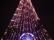 89. Zilker Tree And Ferris Wheel