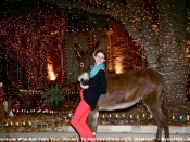 90. Because Why Not Take Your Donkey To See Christmas Light Displays!