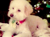 206. Our Sweet Honey in Front of Our Christmas Tree