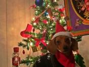 215. Happy Little Weiner Elf