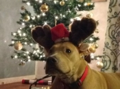 223. Anyone Can Be Santa's Reindeer