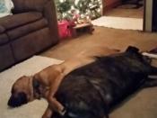 230. Spooning Around the Christmas Tree