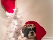 242. Oh Christmas Tree