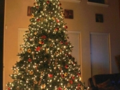 246 Little Person Big Tree