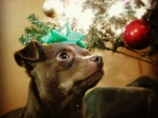 026. Wally Pups Christmas Card