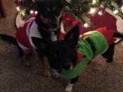 047. Santa and Her Elf