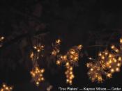 kayceewilson-treeflakes-cedarpark